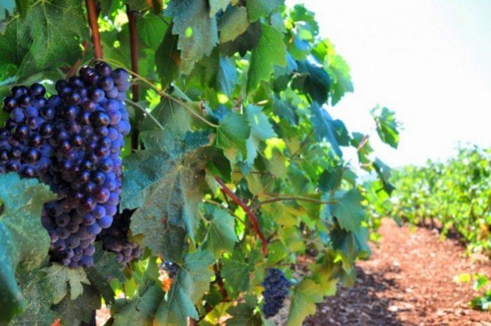vinho monemvasia